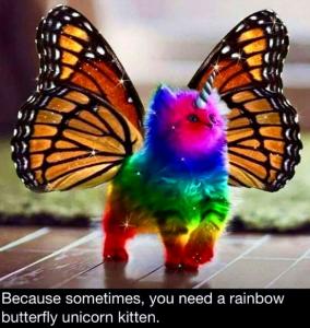 uni-rainbow-catterfly