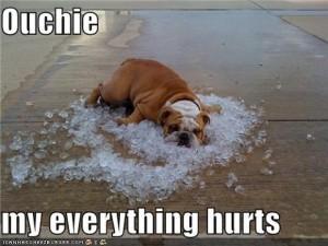bulldog on ice